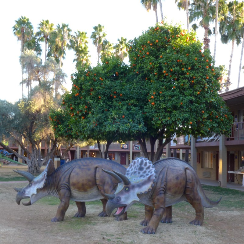 Triceratops amongst the orange trees