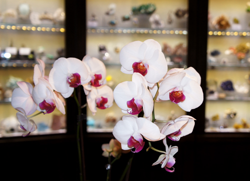 Orchids in the Kristalle and Crystal Classics booth at Sainte-Marie-aux-Mines Mineral Show 2013