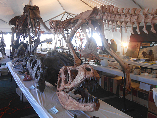 Some marquees are filled with an array of fossil dinosaur and mammal skeletons.  You might need a very large suitcase to get them home!