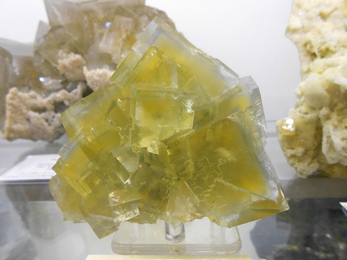 Yellow and blue colour-zoned Fluorite cubes in an aesthetic group from Le Burc Mine, Tarn, Midi-Pyrénées, France.