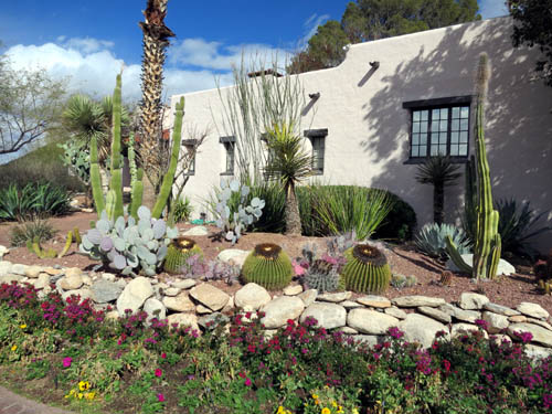 Cacti in the lovely surrounds of the Westward Look Resort