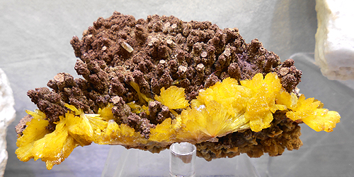 Legrandite sprays on matrix from the Ojuela Mine, Mapimi, Durango, Mexico.