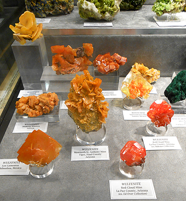 A closer look at some of the brightly coloured specimens in Wayne and Dona's collection: An assortment of bright orange Wulfenite specimens from various locations.