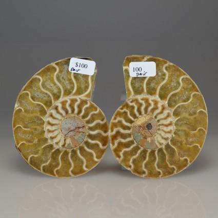 AmmonitepairA3