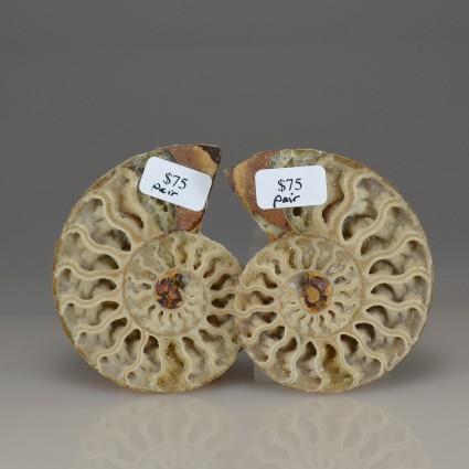 AmmonitepairA4
