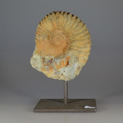 Fossilammonite